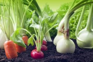 propagation mats,propagating mats,propagating equipment,progrow,greenhouse equipment,durable growing equipment