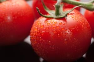 grow tomato plants
