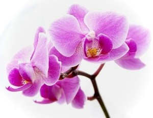 grow orchids,greenhouse equipment